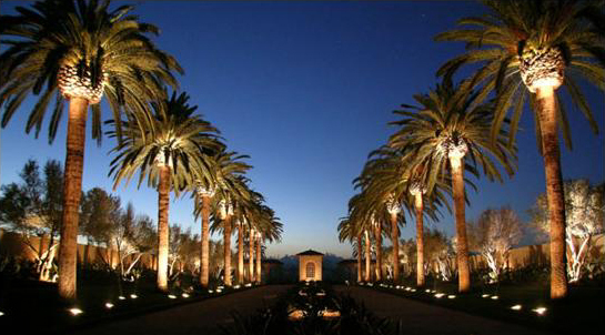 Orlando landscape lighting contractor orlando florida outdoor entry roadway with median and large palm trees illuminated with uplights by our orlando commercial lighting orlando commercial landscape aloadofball Choice Image