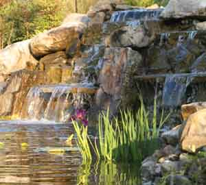 Orlando garden water fall with aquatic plantings such as native lutea and iris